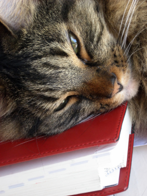 Cat Napping on a book